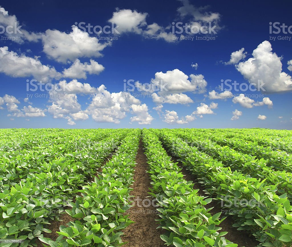 Green plants on field stock photo