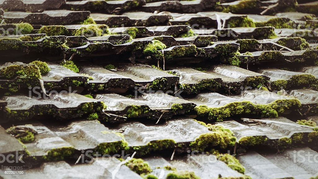 Green plants on the roof royalty-free stock photo