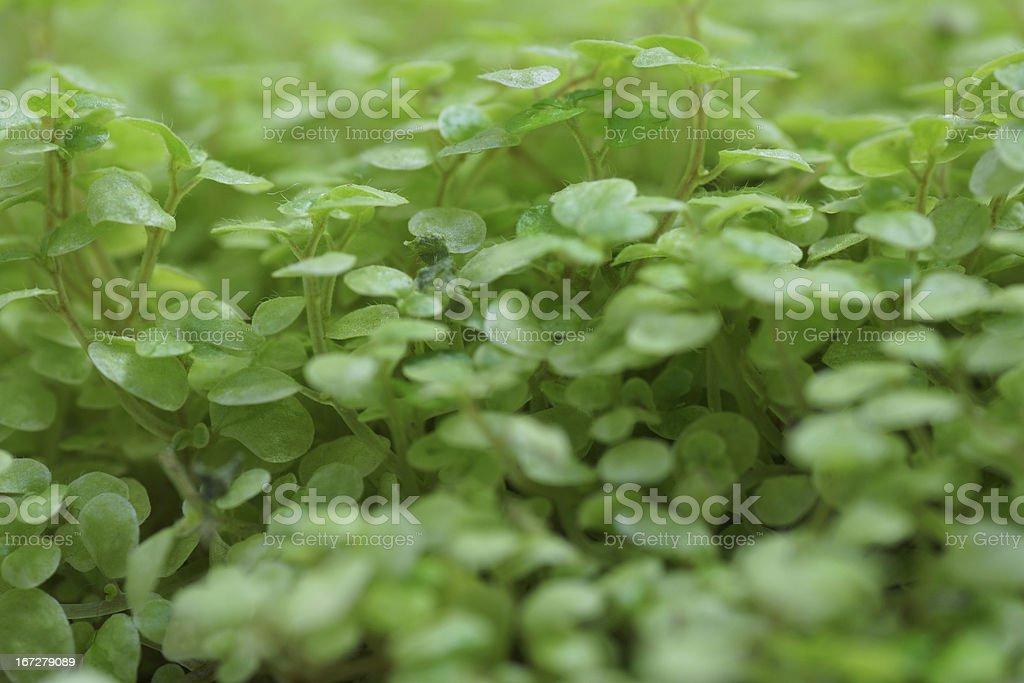 green plants. royalty-free stock photo