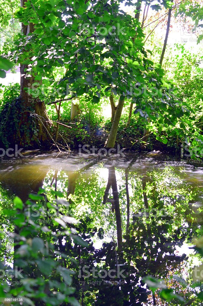 green plants reflecting in a small river stock photo