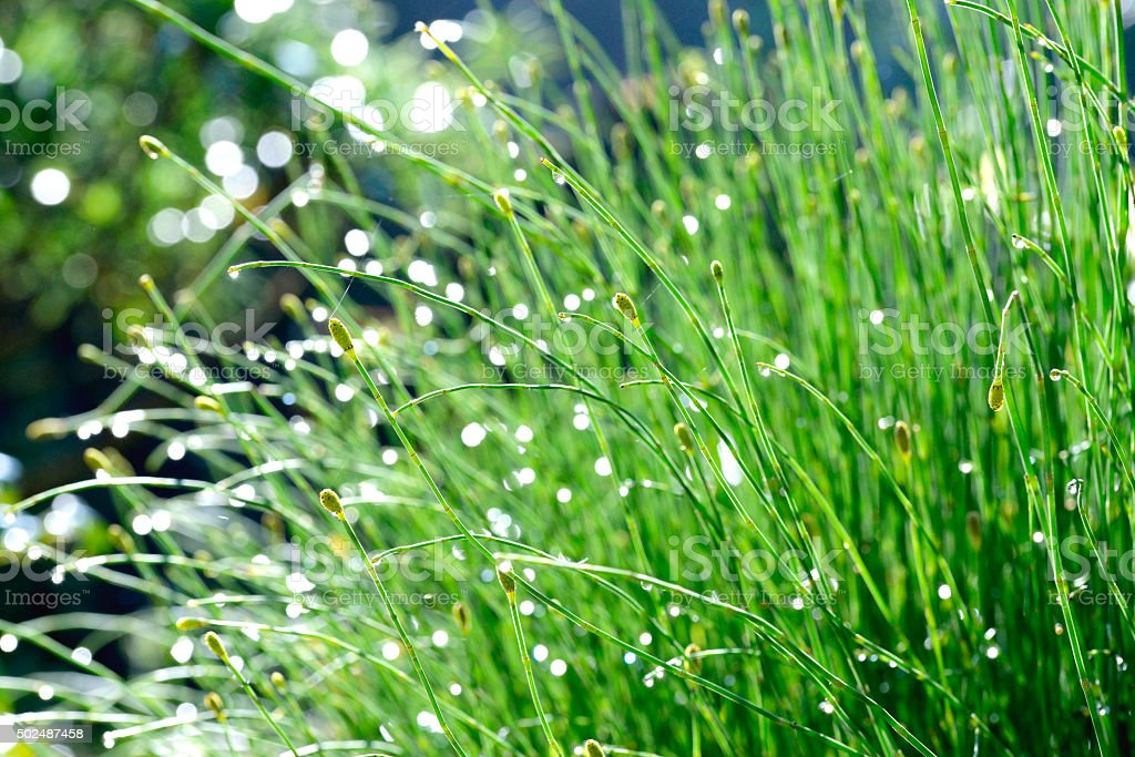 Green plants under natural light royalty-free stock photo