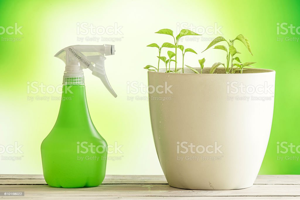 Green plants with a spray can stock photo