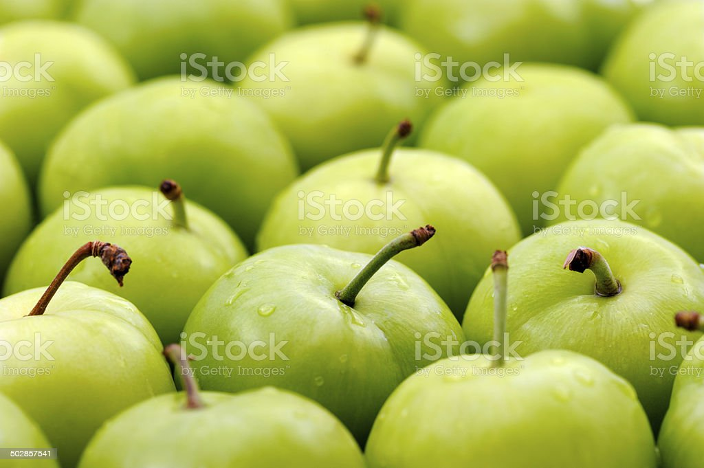 Green Plums stock photo