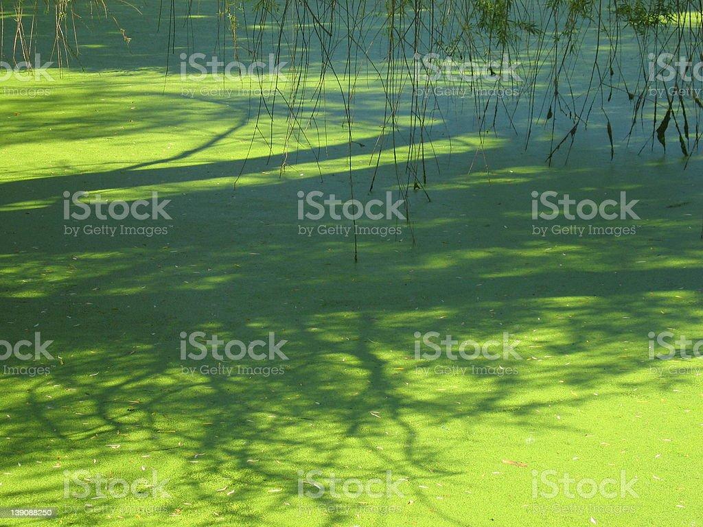 Green pond royalty-free stock photo