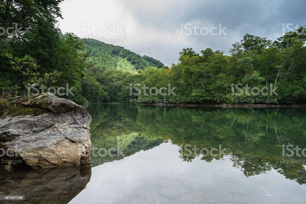 Green pond stock photo