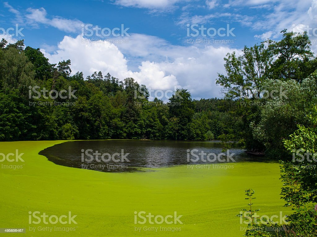 Green pond stock photo
