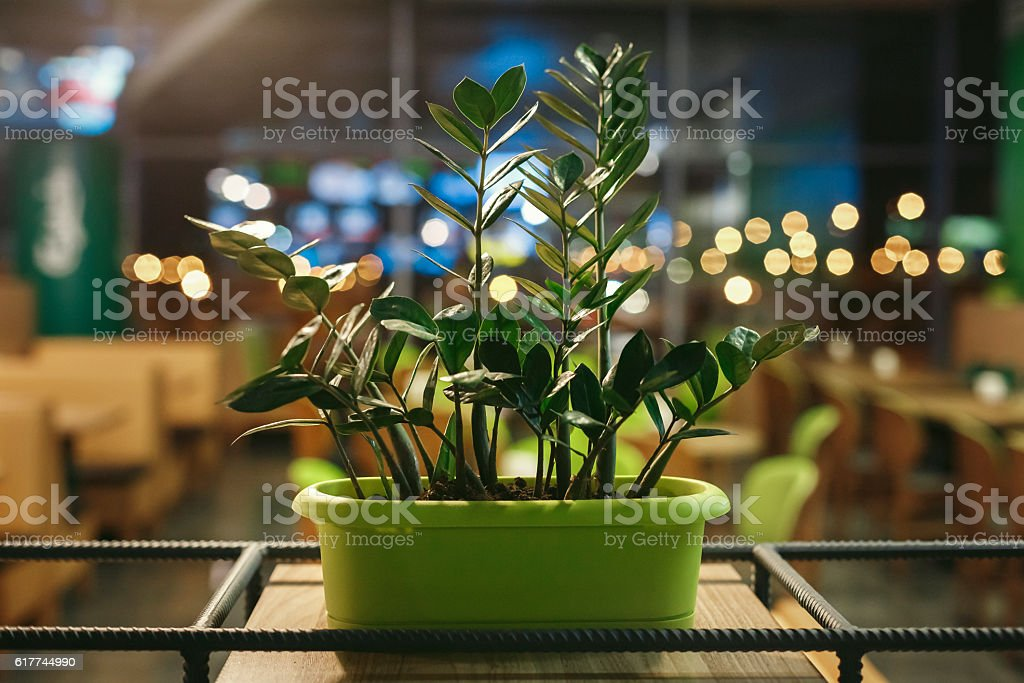 Green pot of flowers is on shelf in evening stock photo