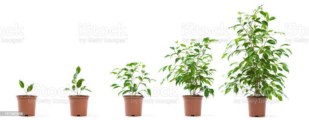 green potted plant growth stages isolated on white stock photo