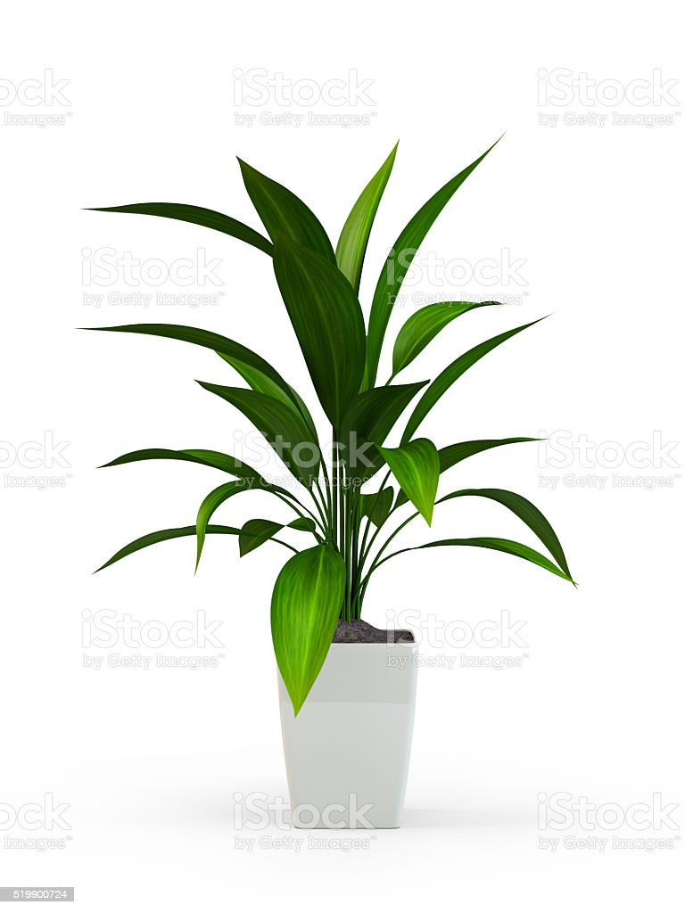 Green potted plant stock photo