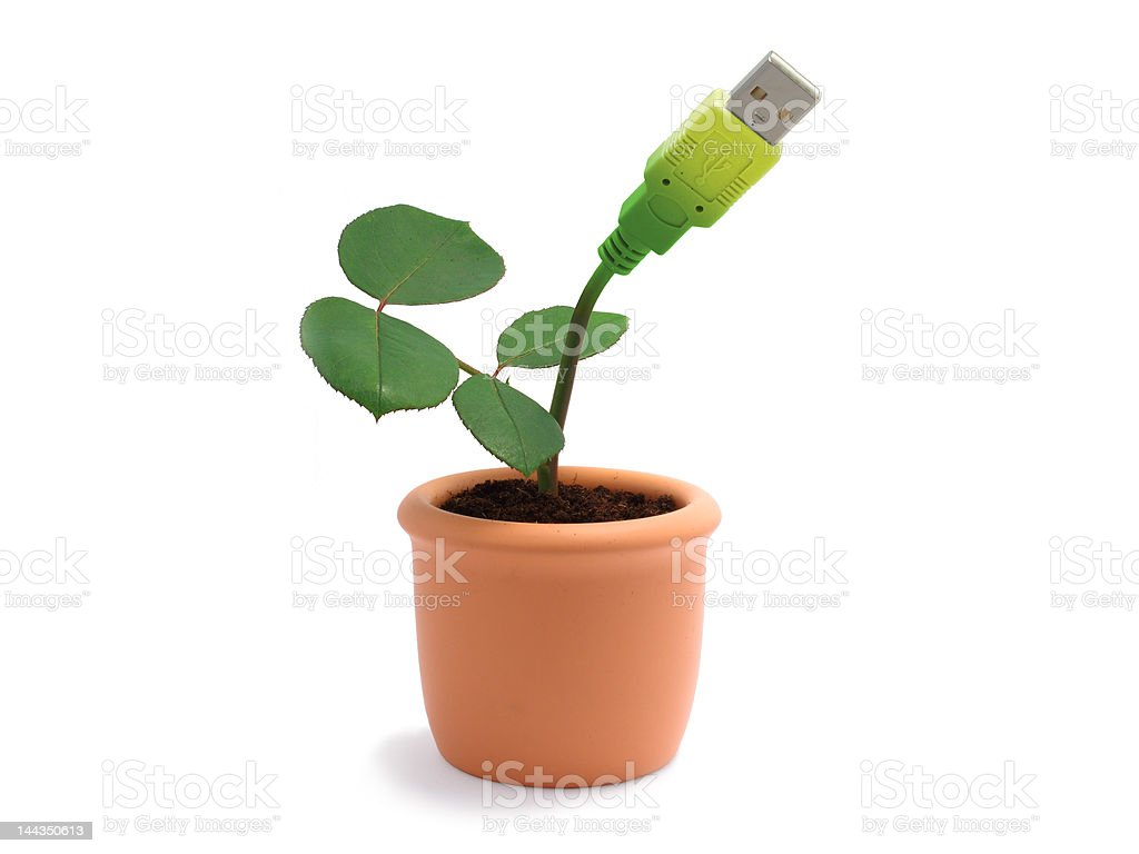 Green potted plant with usb cable stock photo