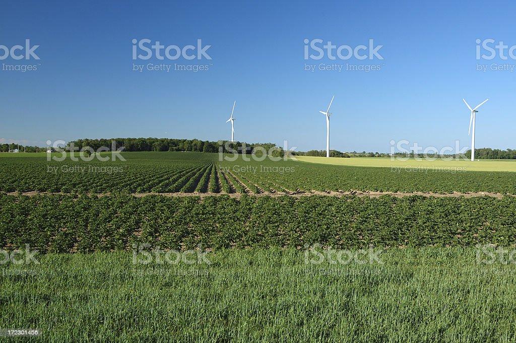 Green power windmills in an Ontario field stock photo