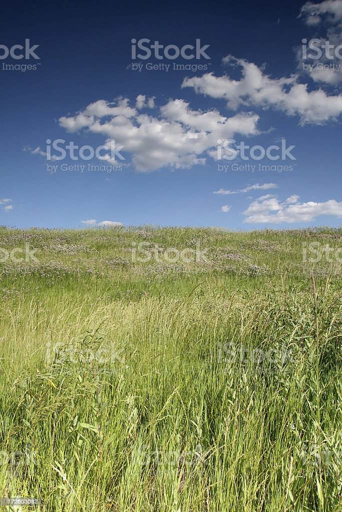 Green Prairie and Blue Sky royalty-free stock photo