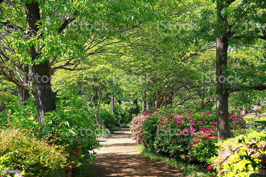 Verde promenade  foto de stock libre de derechos