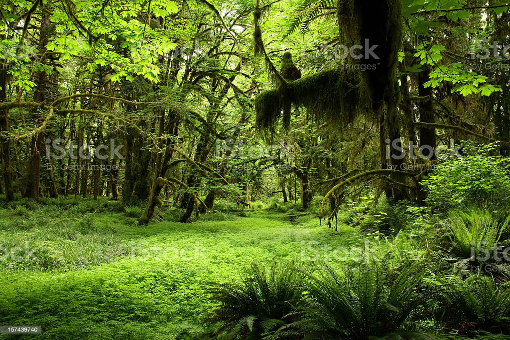 Green Rainforest stock photo