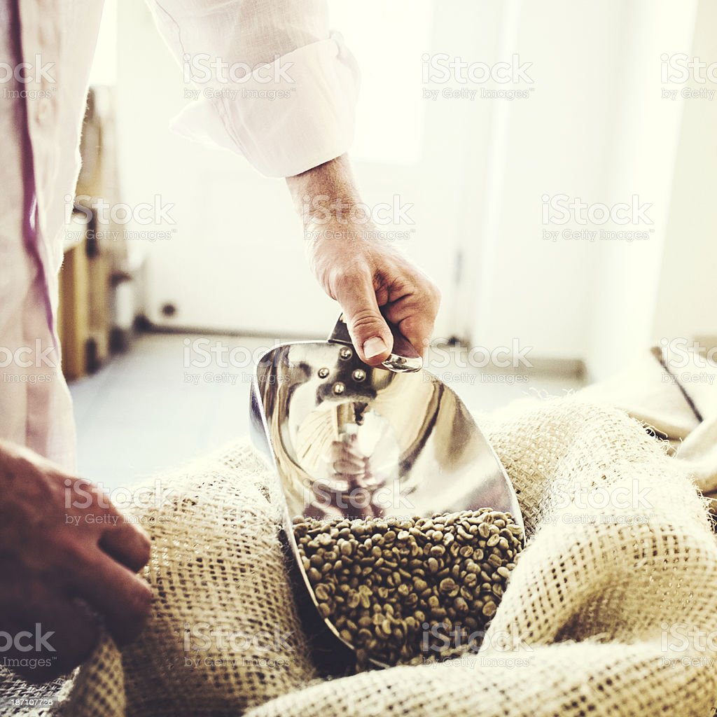 Green Raw Coffee Bean Crop royalty-free stock photo
