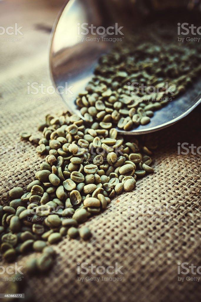 Green Raw Coffee Bean Crop stock photo