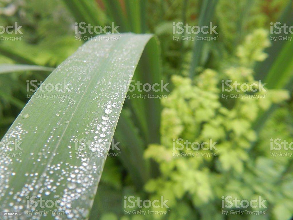 Green Reed stock photo