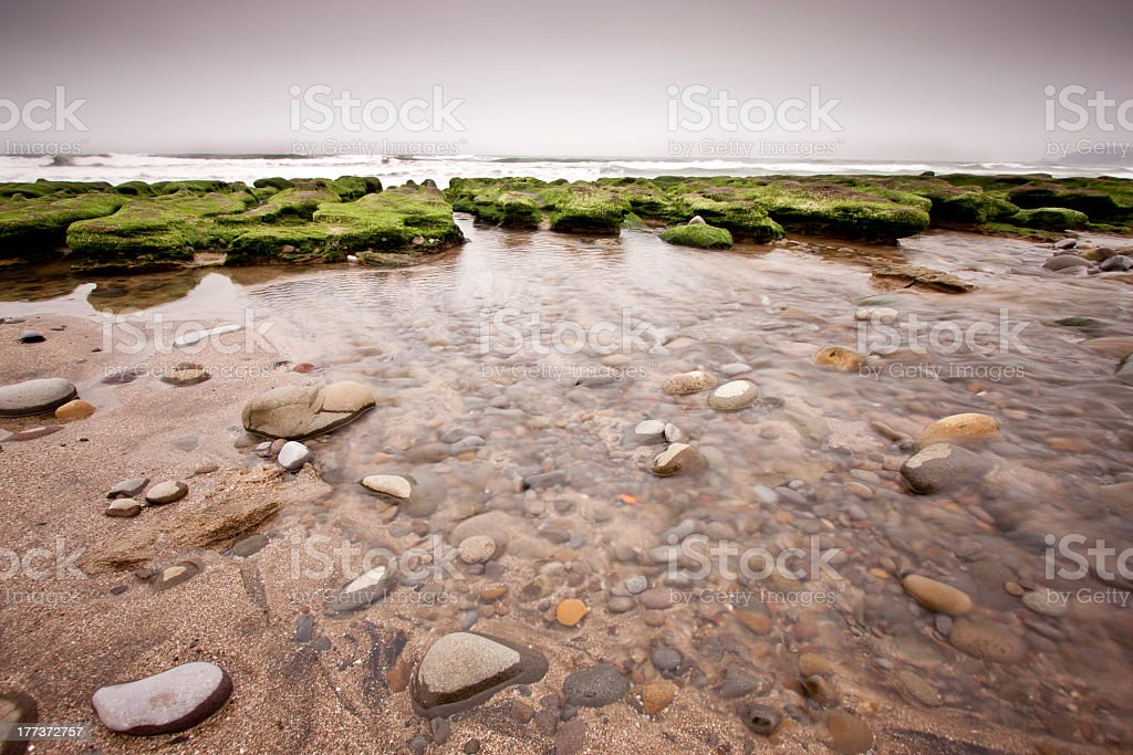 green reef stock photo