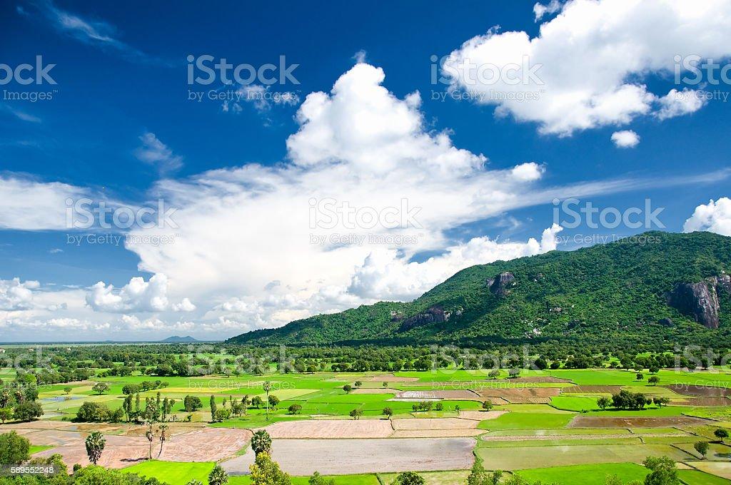 Green rice field in An Giang, Mekong Delta, Vietnam stock photo