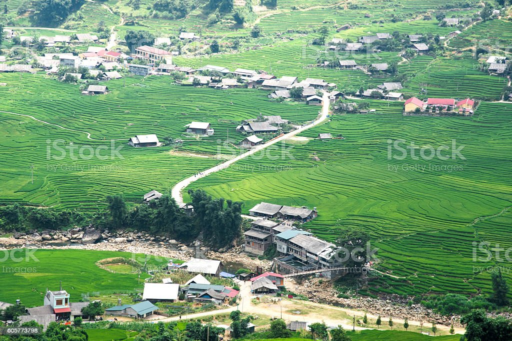 Green Rice fields and rice terraced on mountain at SAPA, Vietnam. stock photo