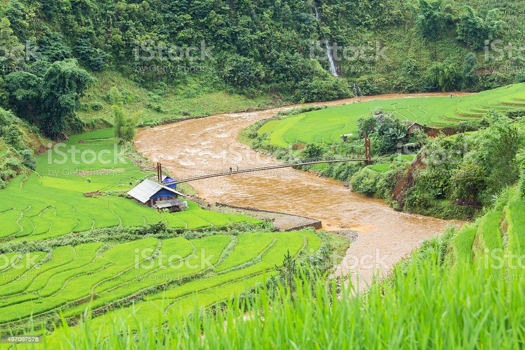 Green Rice fields on terraced in Mu cang chai stock photo
