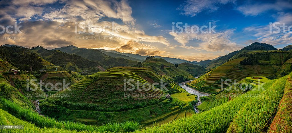 Green Rice fields on terraced in Mu cang chai, Vietnam stock photo