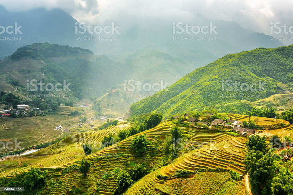 Green rice terraces at highlands of Sa Pa in Vietnam stock photo