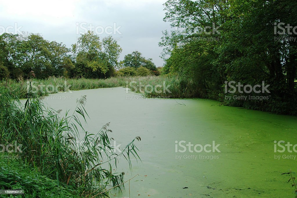 Green River Algae royalty-free stock photo