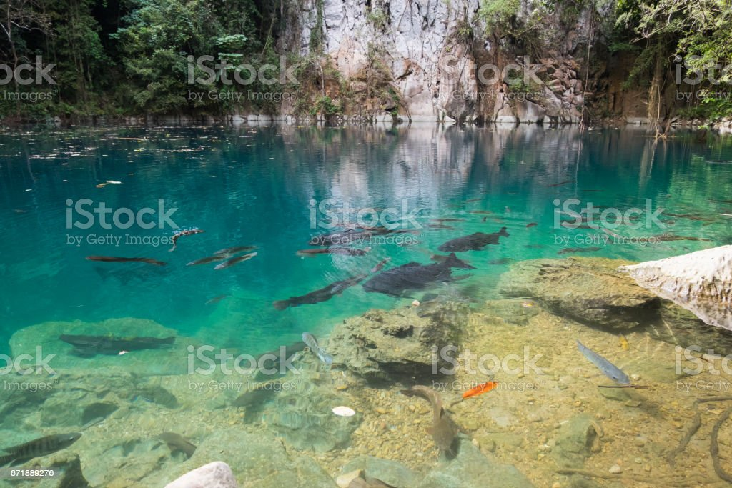 Green river and fish at Phulhomkeaw in Lampang, Thailand stock photo