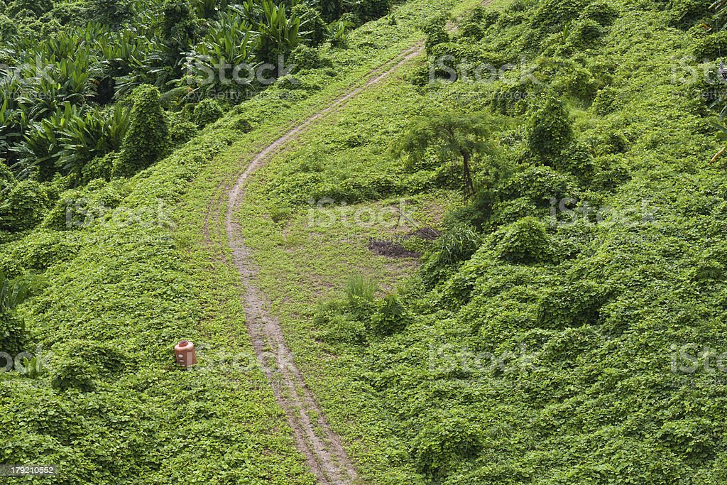 Green Road on mountain royalty-free stock photo