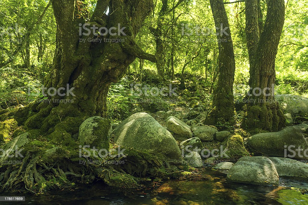 green rocky forest royalty-free stock photo