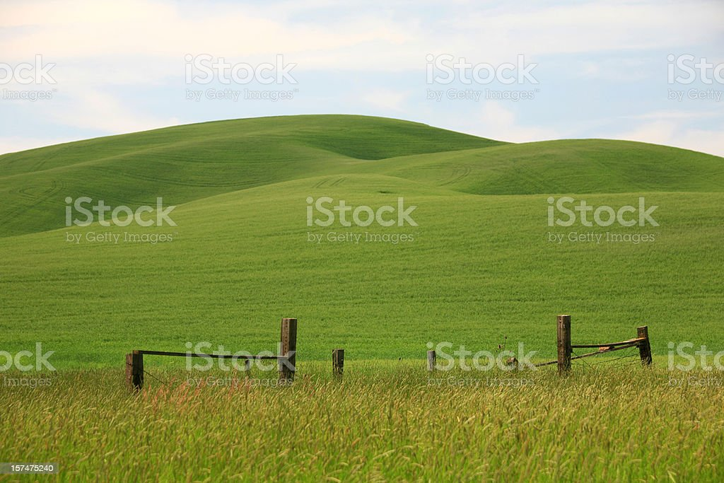 Green Rolling Hills in Washington State stock photo