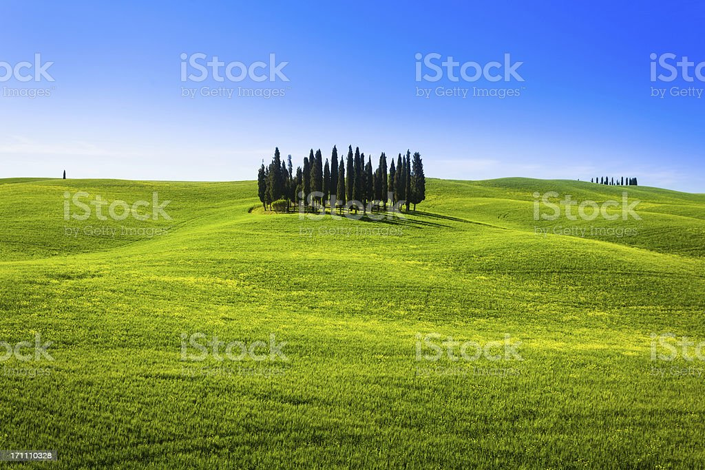 Green Rolling Hills Landscape in Tuscany with Cypress Trees royalty-free stock photo
