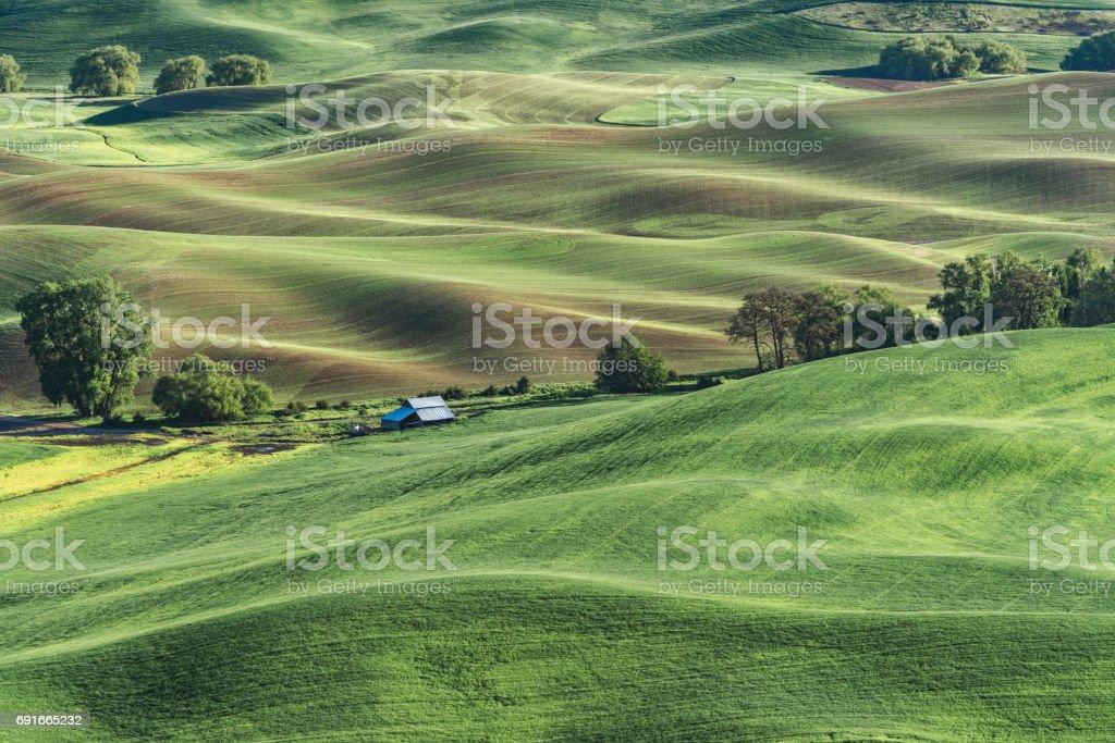 Green rolling hills, Palouse, Washington State stock photo