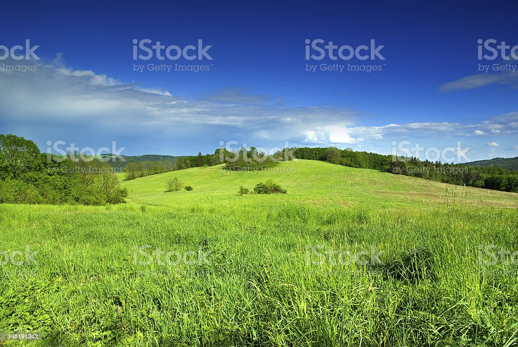 A green rolling meadow on a sunny day stock photo
