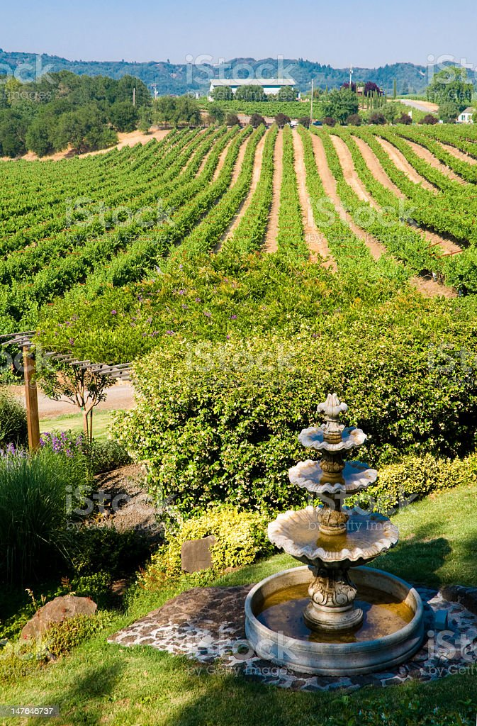 Green rolling vineyard in California royalty-free stock photo