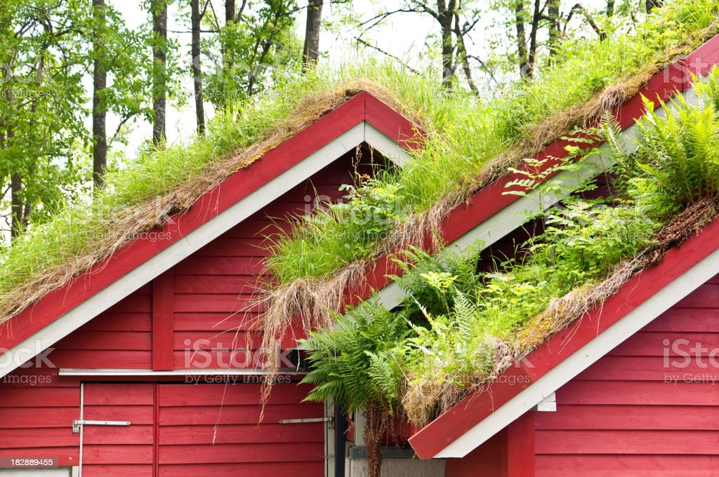 Norwegian house with traditional green roof