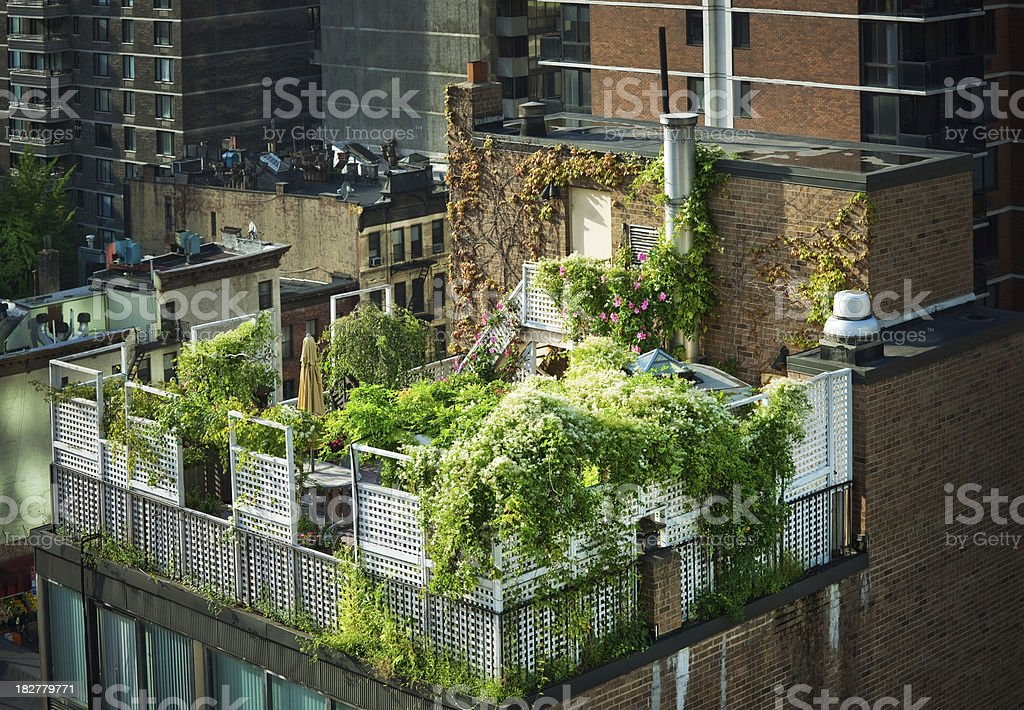 Green Rooftop in New York City stock photo