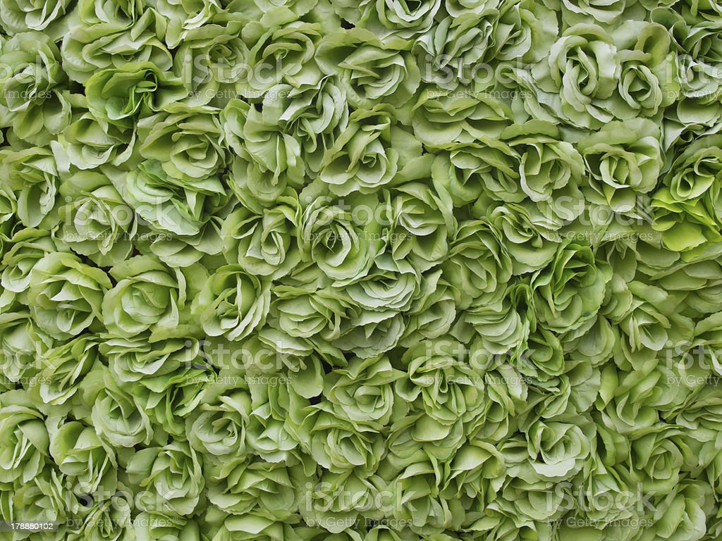 green roses background royalty-free stock photo