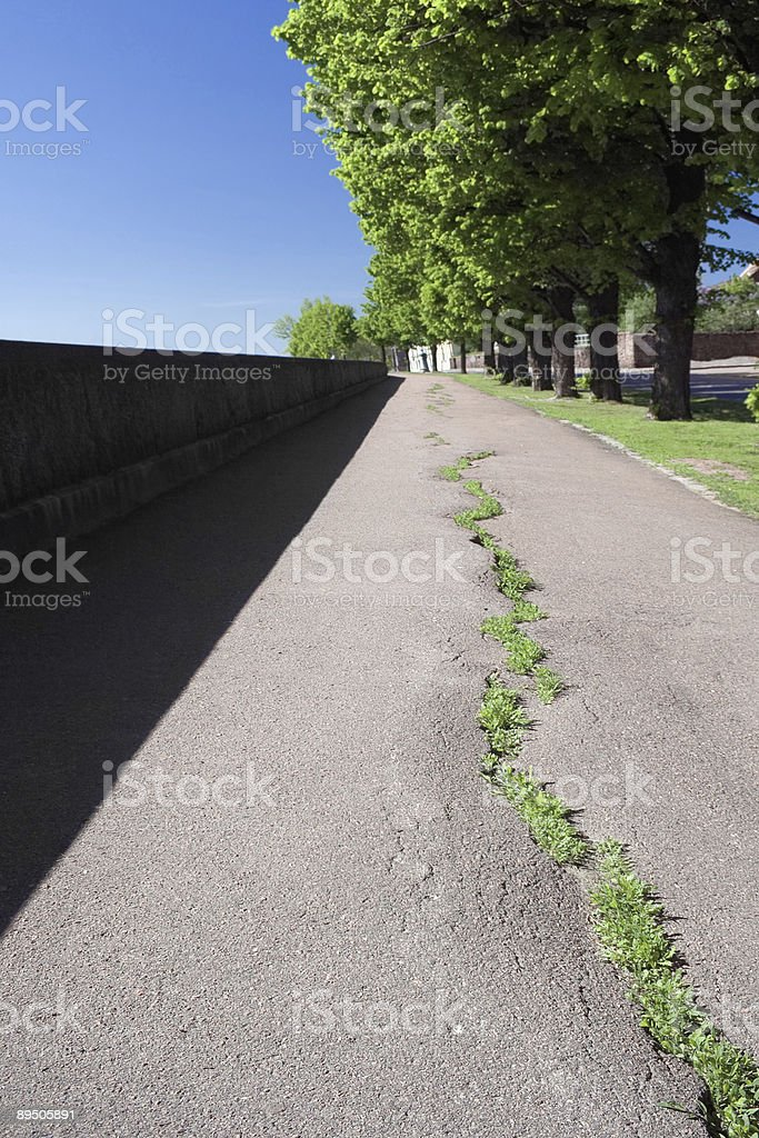 Green rows royalty-free stock photo
