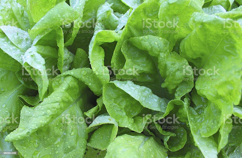 green salad background stock photo