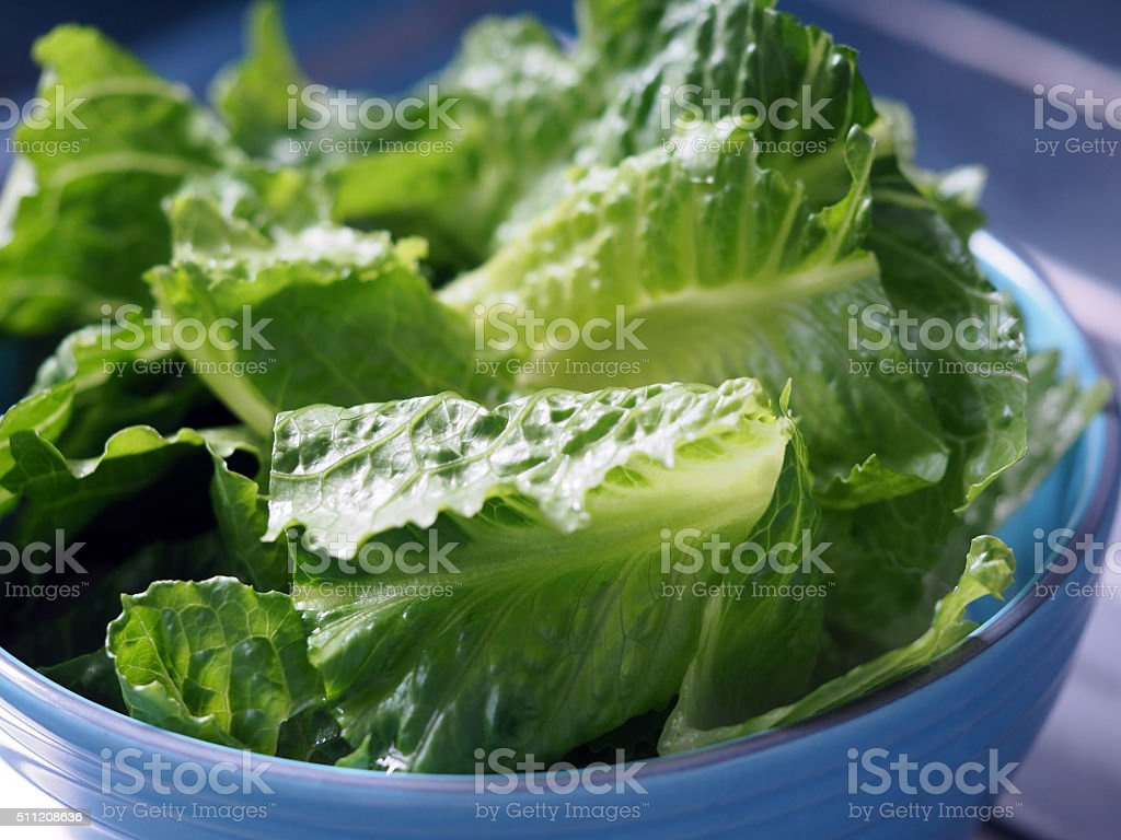 Green salad cos romaine lettuce sliced stock photo