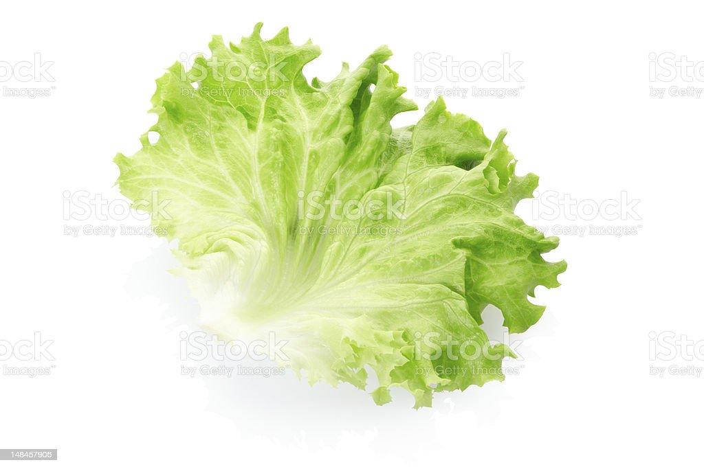 Green salad leaf stock photo