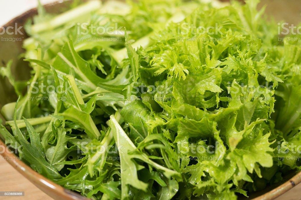Green salad stock photo