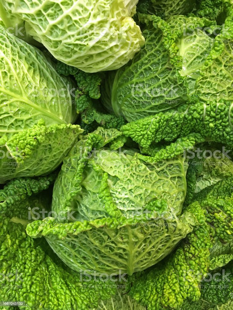 Green savoy cabbage stock photo