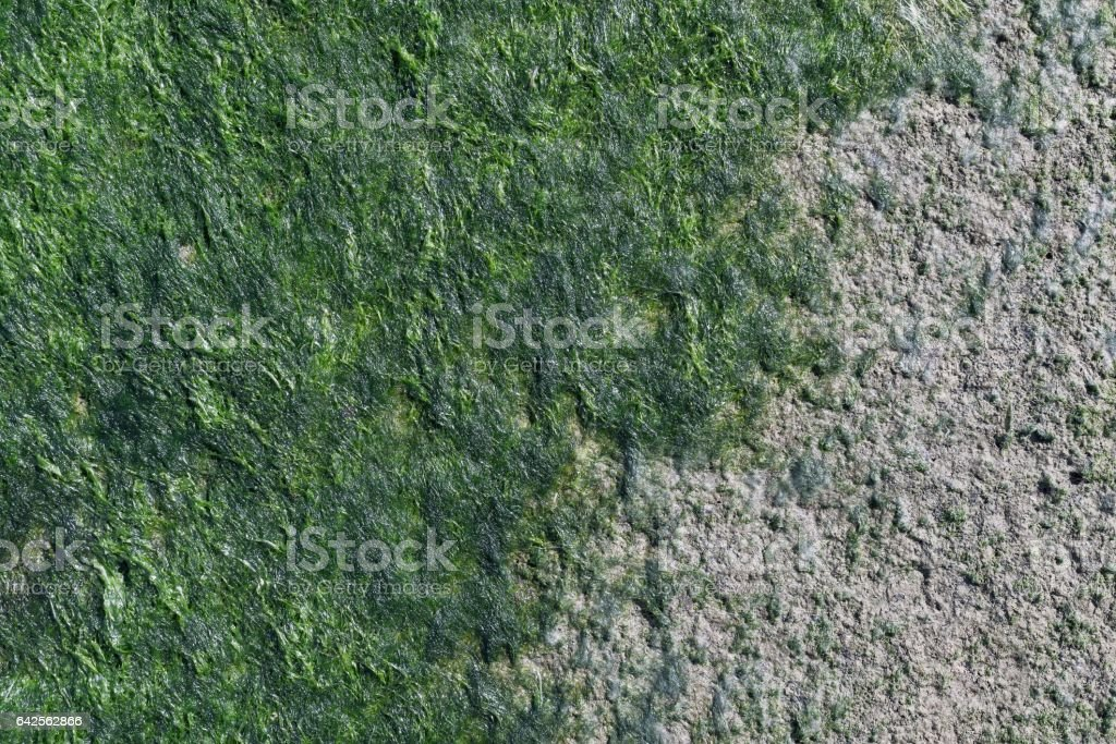 green seaweed on a concrete surface stock photo