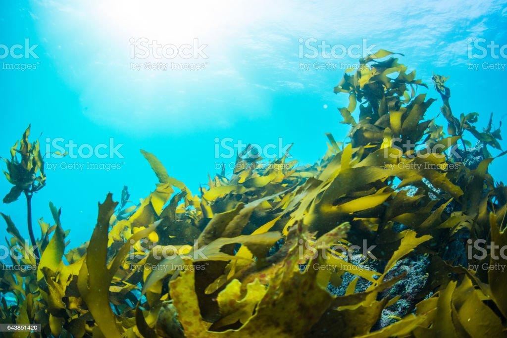 Green Seaweed stock photo