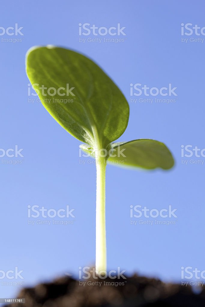 Green seedling against blue sky royalty-free stock photo