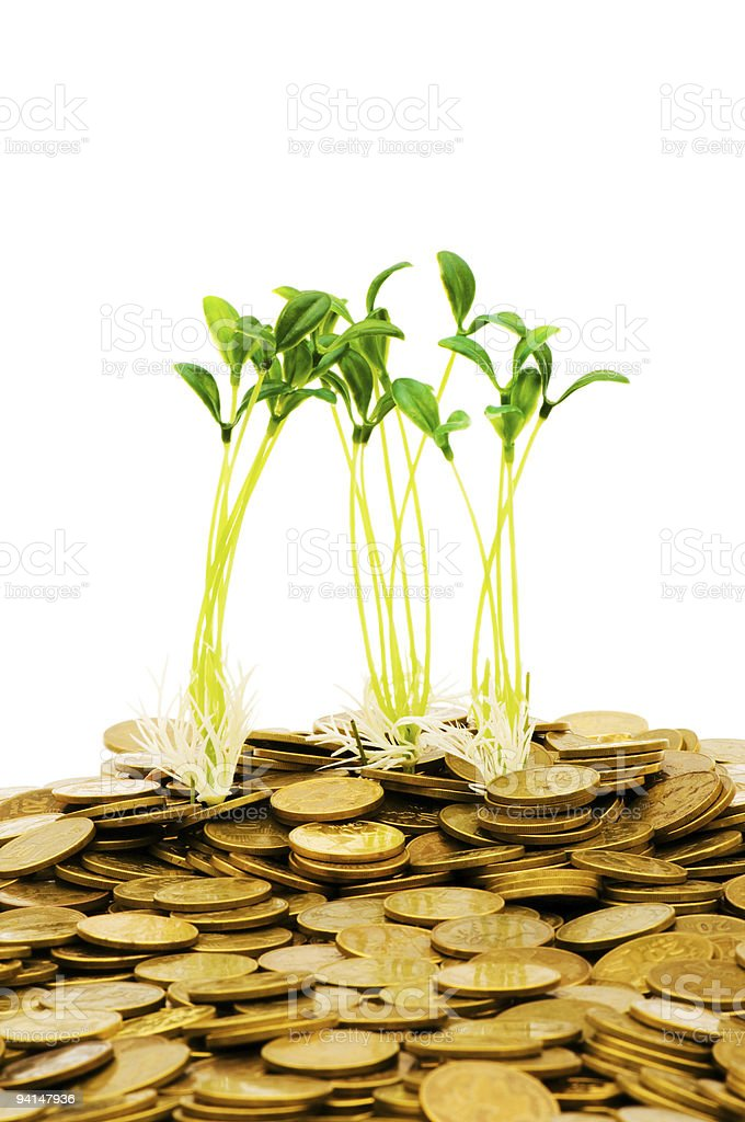 Green seedling growing from the pile of coins stock photo