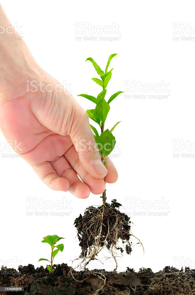 Green seedling in hand royalty-free stock photo